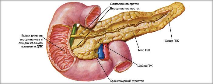 Поджелудочной железы эхопризнаки реактивных изменений