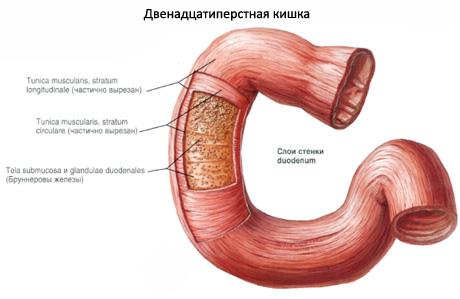 семечки от простатита