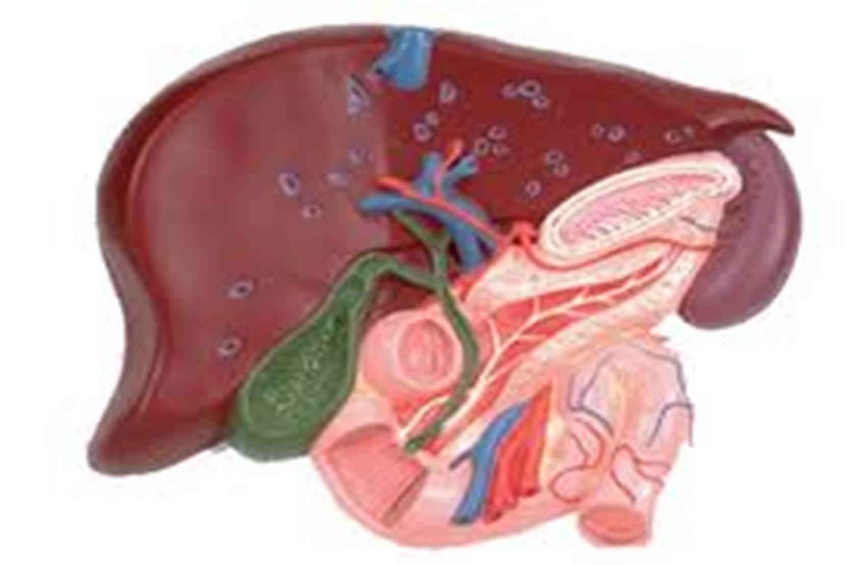 Воспаление желчного пузыря диета лечение
